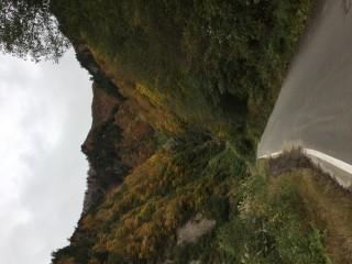 2017年10月21日 秋山林道周辺