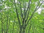 のよさの里・遊歩道と落葉広葉樹林