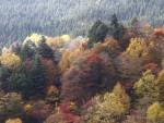 奥志賀の山々と樹海